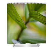 Levels Shower Curtain