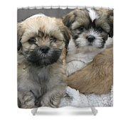 Lhasa Apso Puppy Painting Shower Curtain