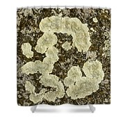 Lichen Design Shower Curtain