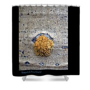 Lichen On The Trees 1 Shower Curtain