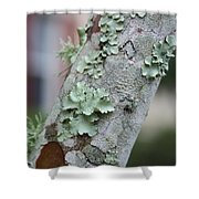 Lichens 2 Shower Curtain