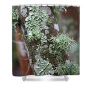 Lichens 4 Shower Curtain