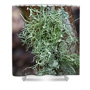 Lichens 6 Shower Curtain