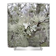 Lichens In The Plums Shower Curtain