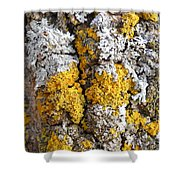 Lichens On Tree Bark Shower Curtain