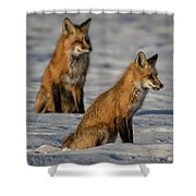 Licking Her Chops Shower Curtain