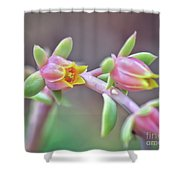 Life Delights In Life Shower Curtain