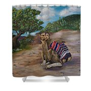 Life In Israel Shower Curtain