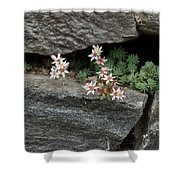 Life On Bare Rock - Pale Pink Succulents On The Wall Shower Curtain