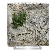 Life On Bare Rock - Pockmarked Limestone And Thyme Shower Curtain