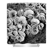 Life On The Rocks In Black And White Shower Curtain