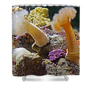 Life Under The Sea In Monterey Aquarium-california Shower Curtain