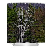 Life's A Birch No.1 Shower Curtain