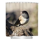 Light And Dark Of A Junco Shower Curtain