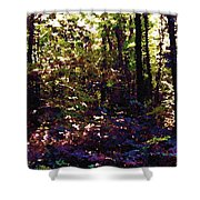 Light And Trees Wcsa  Shower Curtain