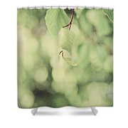 Light As The Air Shower Curtain