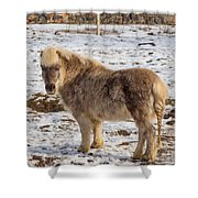 Light Brown Pony Shower Curtain