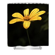 Light From Darkness Shower Curtain