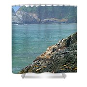 Light House And Sea Lions Shower Curtain