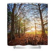 Light In The Cypress Trees II Shower Curtain