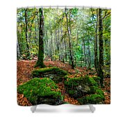 Light In The Forest Shower Curtain