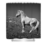 Light Mustang 1 Bw Shower Curtain