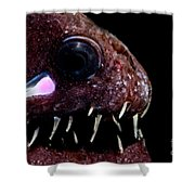 Light Organ Of Threadfin Dragonfish Shower Curtain