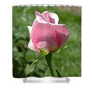 Light Pink Rose Close-up Shower Curtain