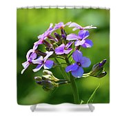 Light Purple Flowers  Shower Curtain
