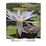 Light Purple Lily Shower Curtain