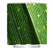 Light Shining Through Palm Frond Shower Curtain