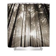 Light Through Forest Shower Curtain