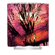 Light Through The Trees  Shower Curtain