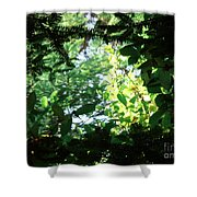 Light Through Trees Shower Curtain
