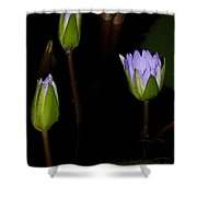 Light Violet Lilies Shower Curtain