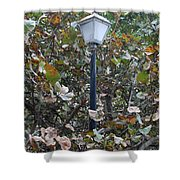 Lighted Trees Shower Curtain