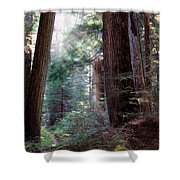 Lighting The Path Shower Curtain