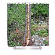 Lightning Strike On Tree Shower Curtain