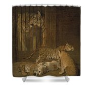Ligres Bred  Agass Shower Curtain