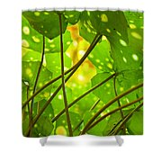 Ligularia Tussilaginea Shower Curtain