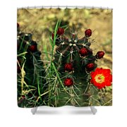 Like A Little Red Star Shower Curtain