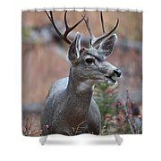 Lil' Fourpoint Shower Curtain