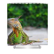 Lil Iguana Shower Curtain