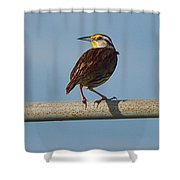 Lil Meadowlark Shower Curtain