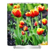 Lil Tulips Shower Curtain