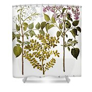 Lilac And Box, 1613 Shower Curtain