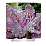 Lilac Azalea Shower Curtain
