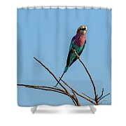 Lilac Breasted Roller 5 Shower Curtain