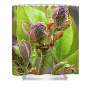 Lilac Buds Shower Curtain