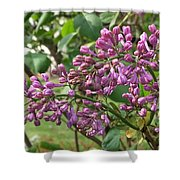 Lilac Buds Cluster Shower Curtain